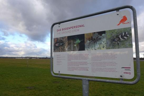 「地勤人員」,其實是要介紹在Tempelhof草地棲息的瀕危昆蟲。