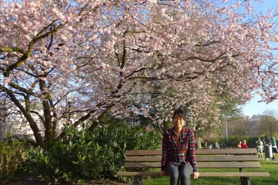 周末同遊,可到附近小鎮Kettwig看櫻花,河邊慢步。