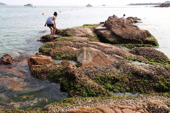 海邊蘊含着豐富的生態。