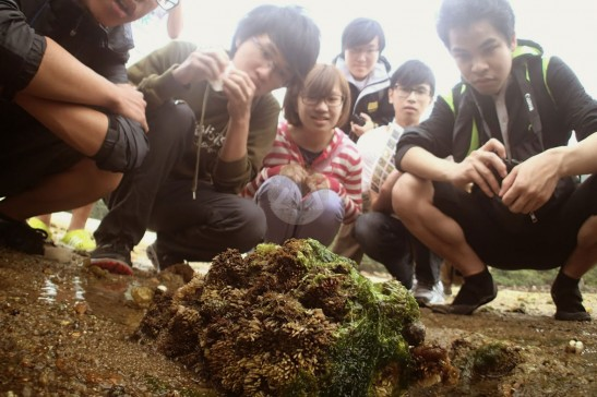 同學仔近距離觀察石上眾多的螺卵團。
