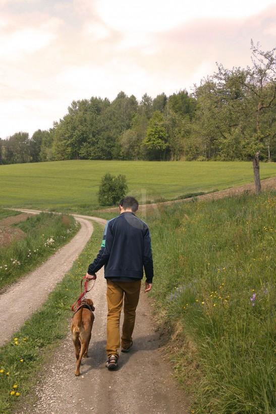 春天的草叢裏常有野兔,Akira本來的獵犬天性,叫牠常常一頭栽進草堆去。
