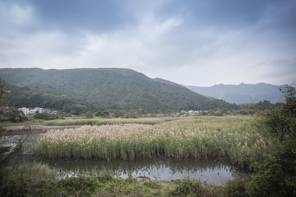 現在長滿蘆葦的「荷花」池。